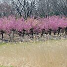 The Thin Pink Line by kibishipaul