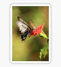 Lows Swallowtail Sticker