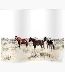 Pferde, Pferd drucken, Pferd Kunst, Wandkunst, Wanddekoration, Trendy print, Animal print, Interior Poster