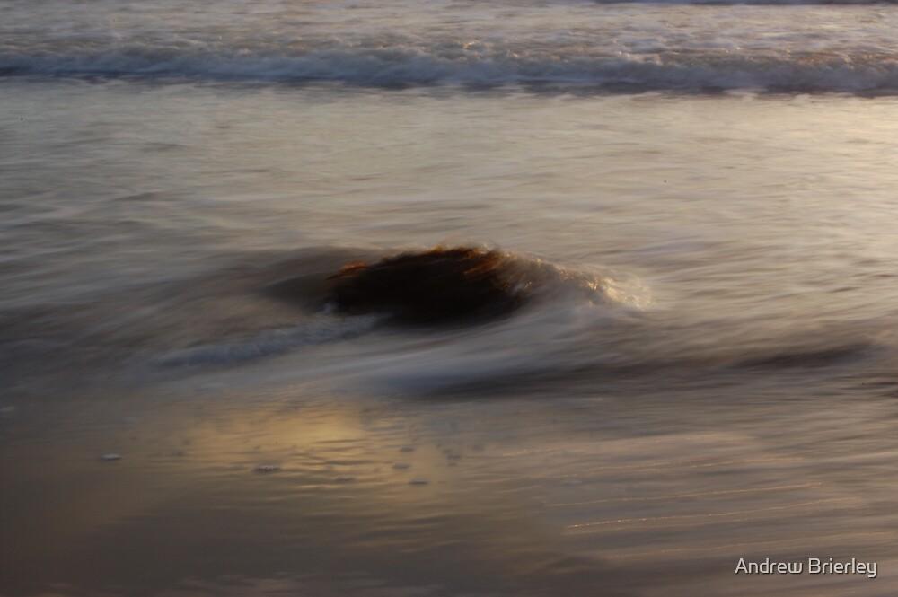 seaweed by Andrew Brierley