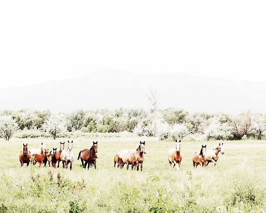 Wilde Pferde, Pferd drucken, Pferd Kunst, Wandkunst, Wanddekoration, Trendy print, Animal print, Interior von juliaemelian