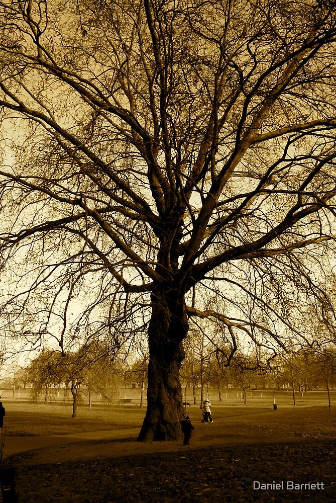 Hyde Park. London by Daniel Barnett