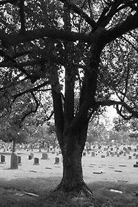 Sunny side cemetery  by becky0726