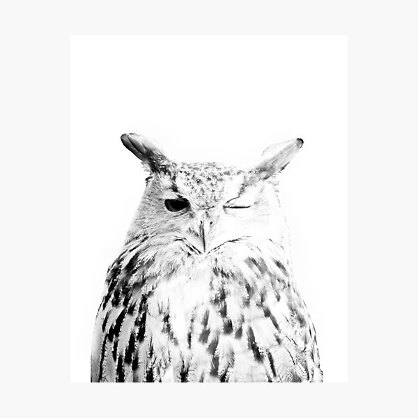 Owl print, Bird print, Scandinavian, Nordic, Marble, Trendy print, Styled, Scandinavian art, Modern art, Wall art, Print, Minimalistic, Modern Photographic Print