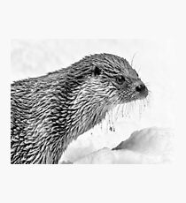 Eurasian Otter in a Snowstorm Photographic Print