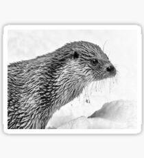 Eurasian Otter in a Snowstorm Sticker