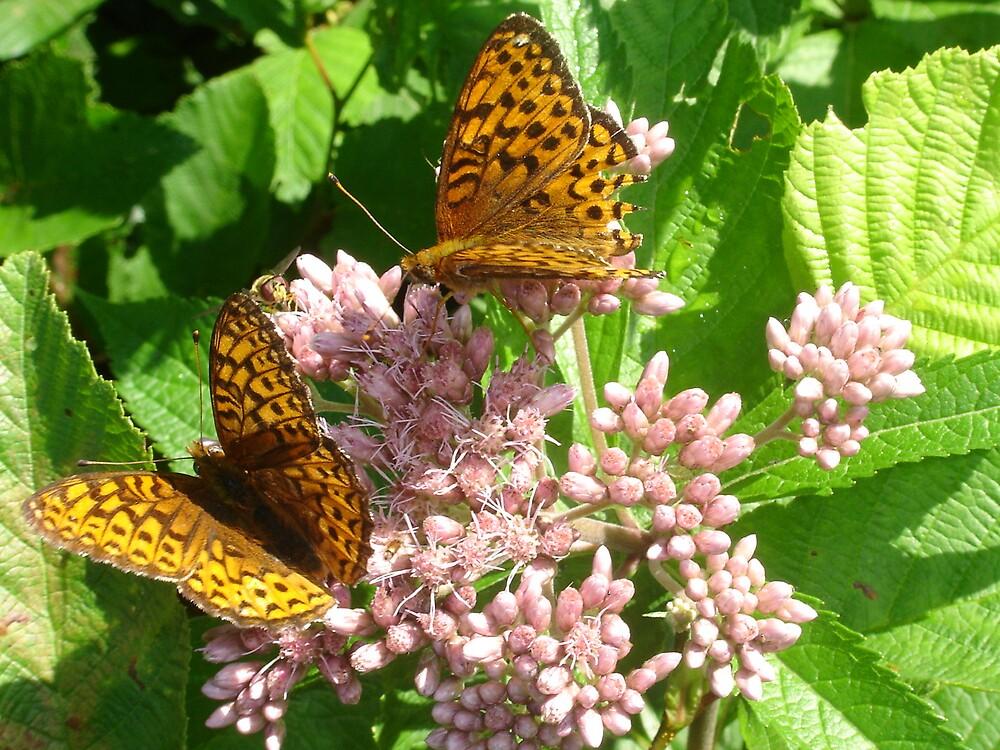 Butterflies by dfoneill