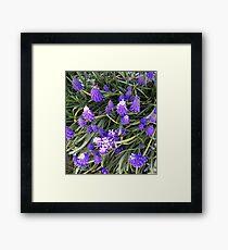 Lupin flowers Framed Print