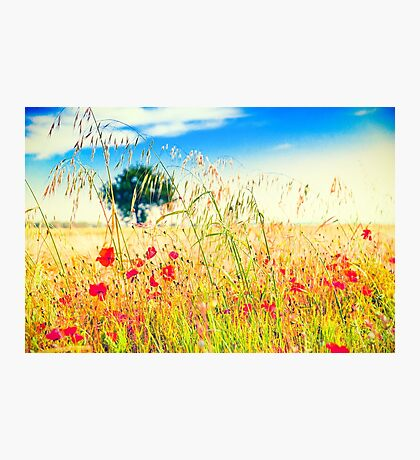 Poppies and tree in the distance Photographic Print