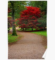 Maple Tree, Westonbirt Arboretum Poster