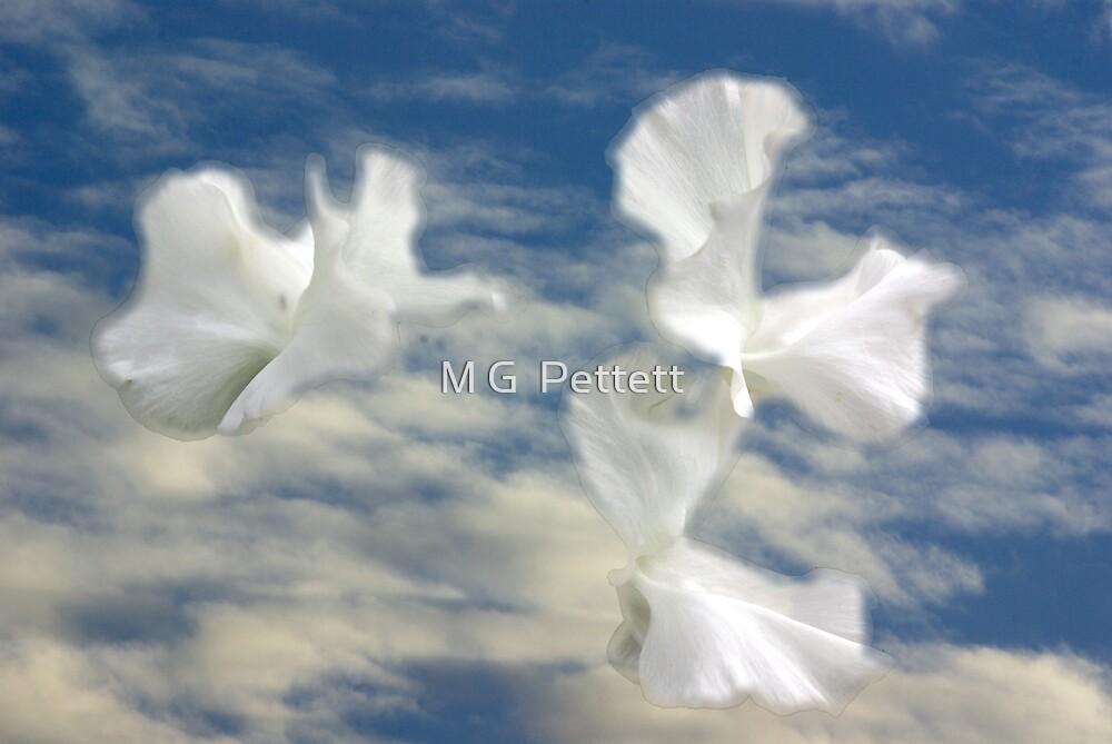 Vol fleuri by M G  Pettett