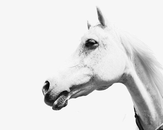 Wilde Pferde, weißes Pferd, Horse print, Pferd Kunst, Wandkunst, Wanddekoration, Trendy print, Animal print, Interior von juliaemelian