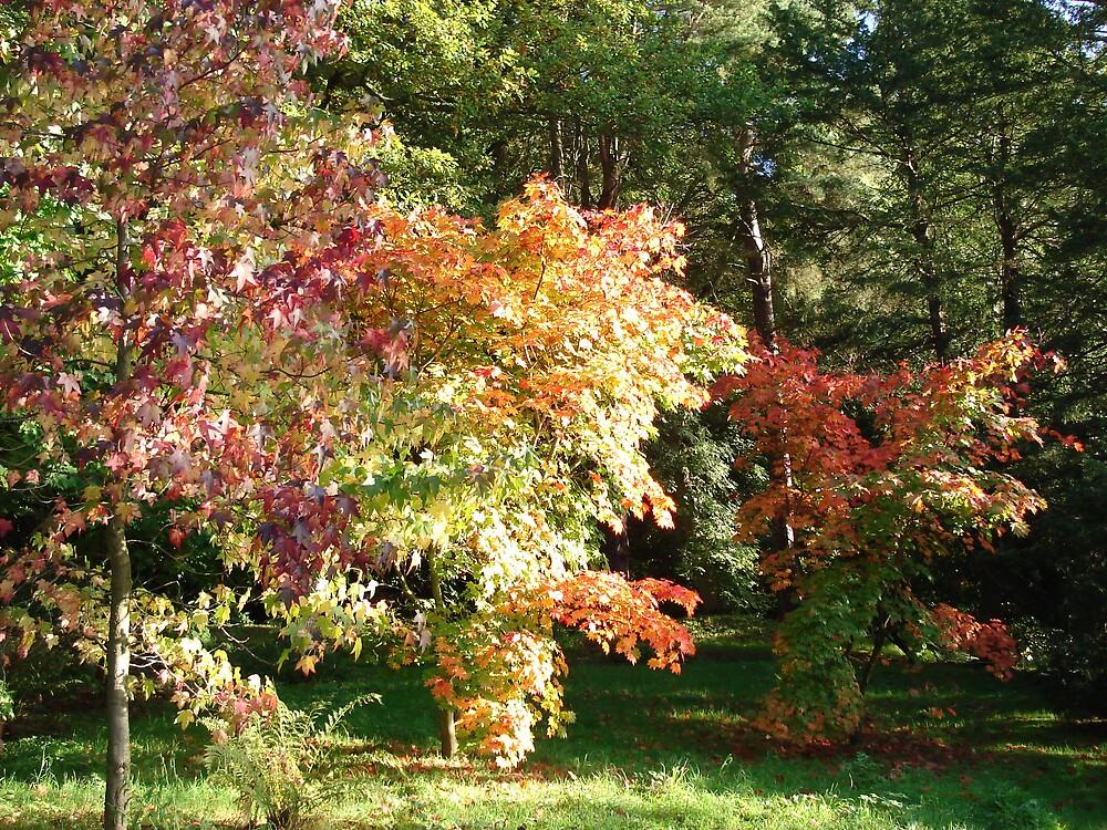 Autumn Colours by LauraM