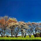 A Bright Spring Day by cclaude