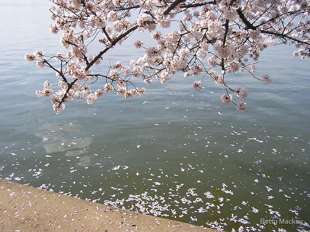 Cherry Blossom original photo by Betty Mackey