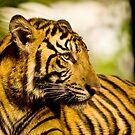 Resting Tiger by Frank Yuwono