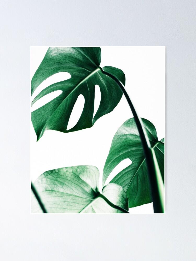 Alternative Ansicht von Monstera Blätter, tropische Blätter, grüne Blätter, Blatt, moderne Kunst, Wandkunst, Print, minimalistisch, modern, skandinavischen Druck Poster