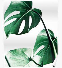 Monstera Blätter, tropische Blätter, grüne Blätter, Blatt, moderne Kunst, Wandkunst, Print, minimalistisch, modern, skandinavischen Druck Poster