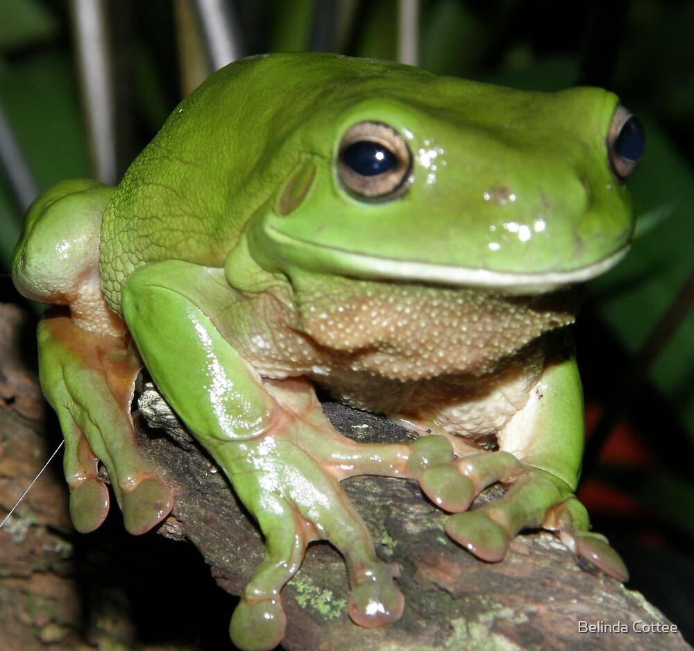 frog on log by Belinda Cottee