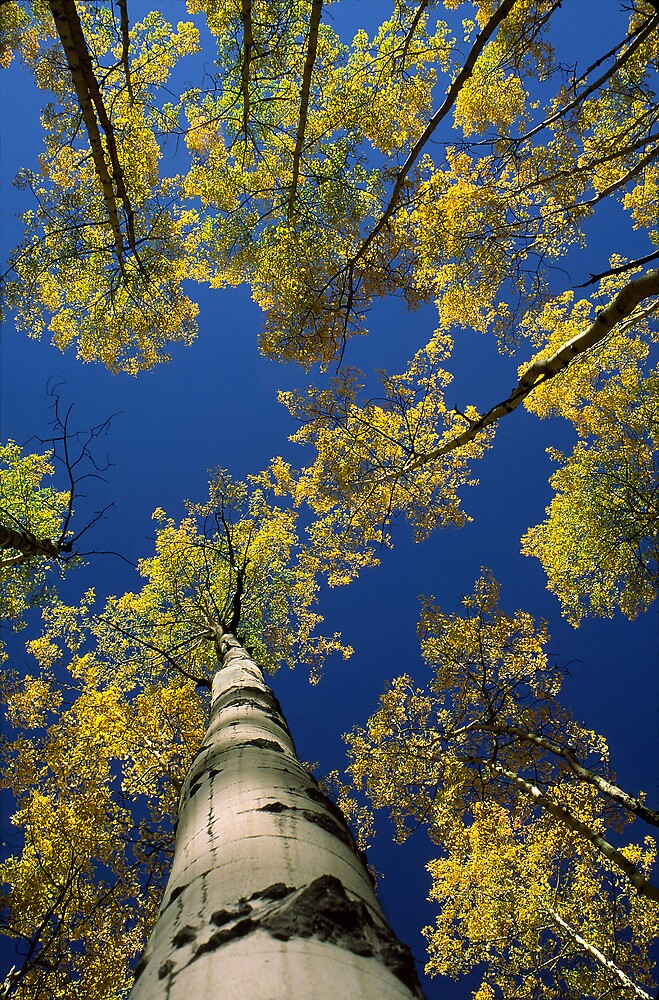 Hows Your Aspen by Steve  Taylor
