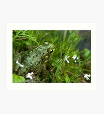 Green Frog Near Pond Art Print