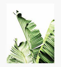 Banana leaves,Tropical leaves, Green leaves, Leaf, Modern art, Wall art, Print, Minimalistic, Modern, Scandinavian print Photographic Print