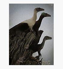 Eoraptor Family Photographic Print