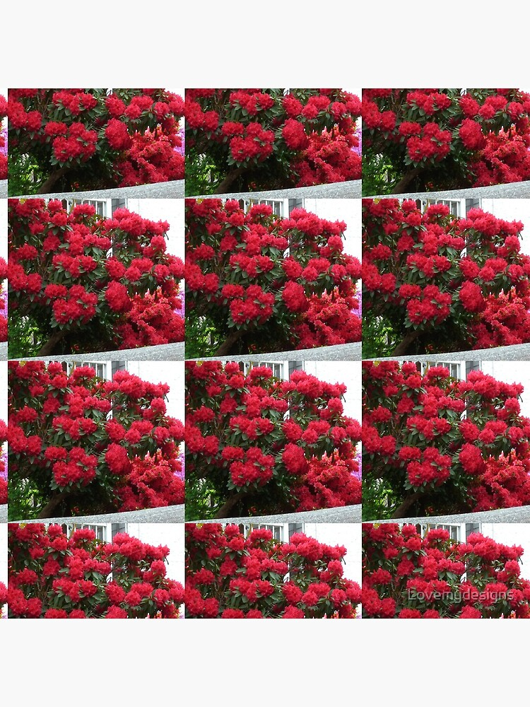 Rhododendron by Lovemydesigns