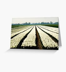 And still more tulips Greeting Card