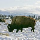 Home on the Range by Ken McElroy