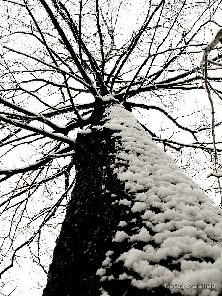 Tall Tree by Tracey Bransfield