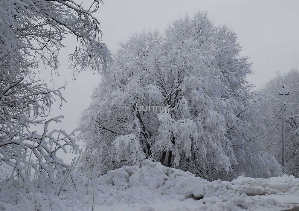 Fresh Snow Series II by bunnij