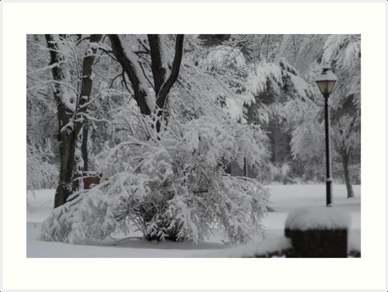 Winter Light II- Fresh Snow Series IV by bunnij