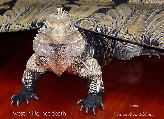 """THINK LIZARDS: """"Invest in life, not death"""" by Patricia Anne McCarty-Tamayo"""