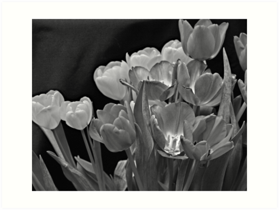 Tulips. by Swede