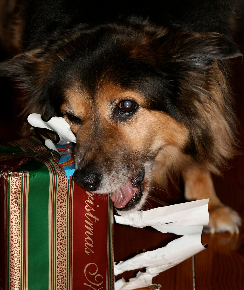 Christmas for Dex by deecee