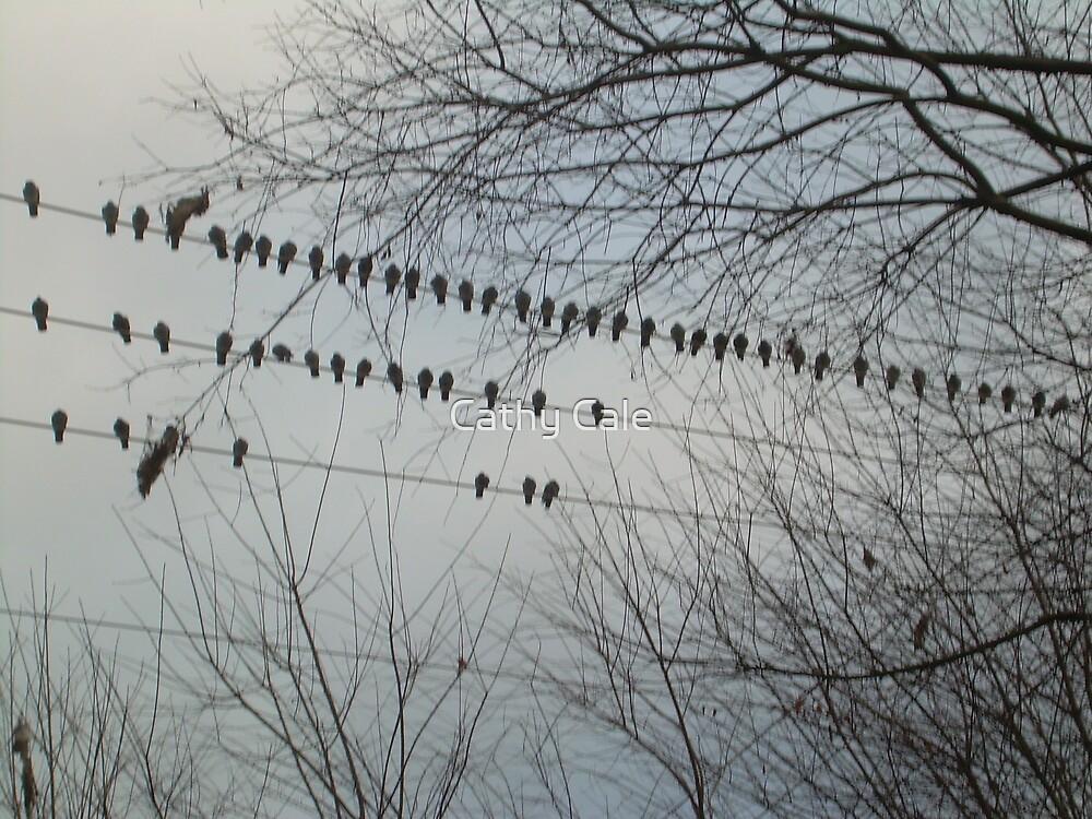 BIRDS BIRDS BIRDS by Cathy Cale