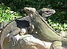 """THINK LIZARDS: """"All God's children have the same right to live."""" by Patricia Anne McCarty-Tamayo"""