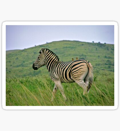 Burchells zebra Sticker