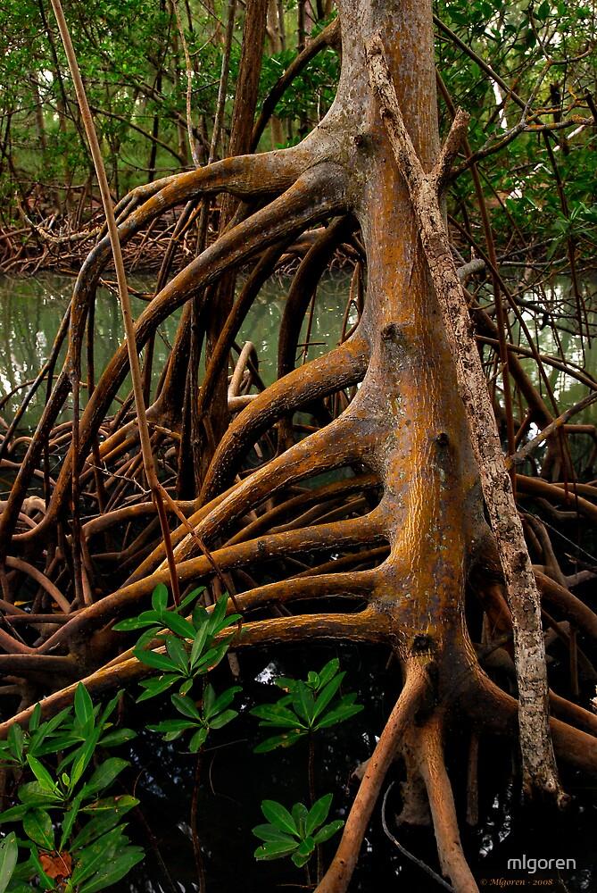 Root III by mlgoren