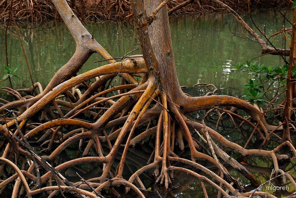 Root II by mlgoren