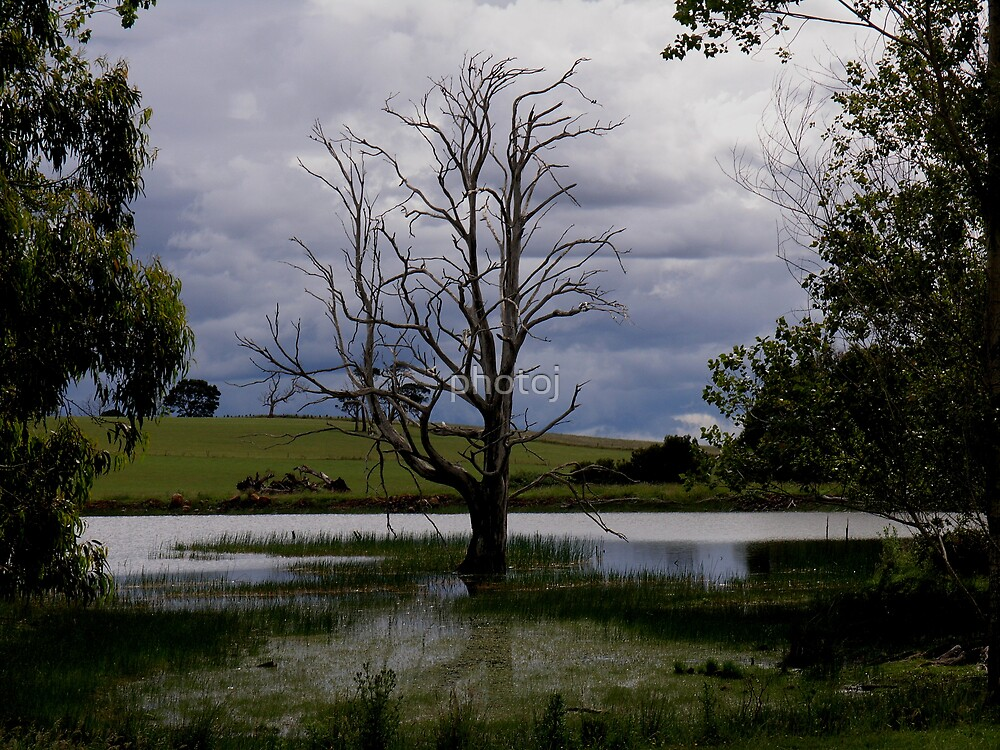 photoj Tas, Northern Midlands by photoj