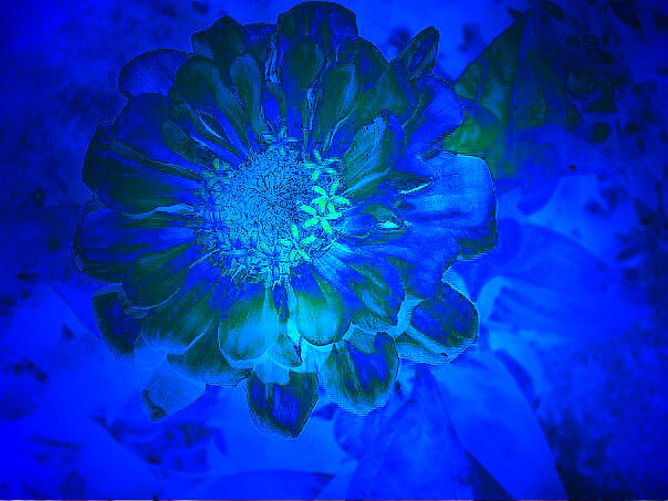 Blue by Jason LeRue