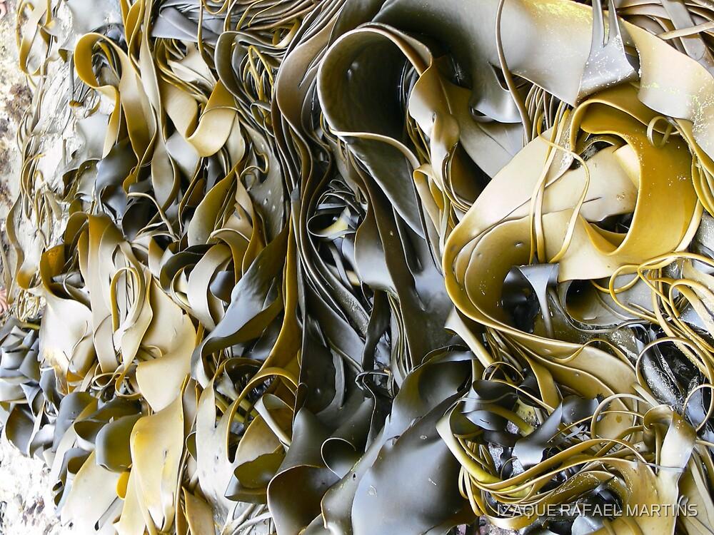 SEAWEED by IZAQUE RAFAEL MARTINS
