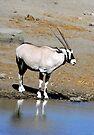 The Oryx by Graeme  Hyde