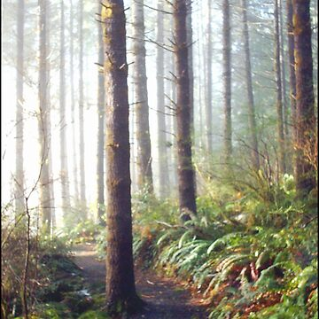 Sun Lit Forest Trail by fnature