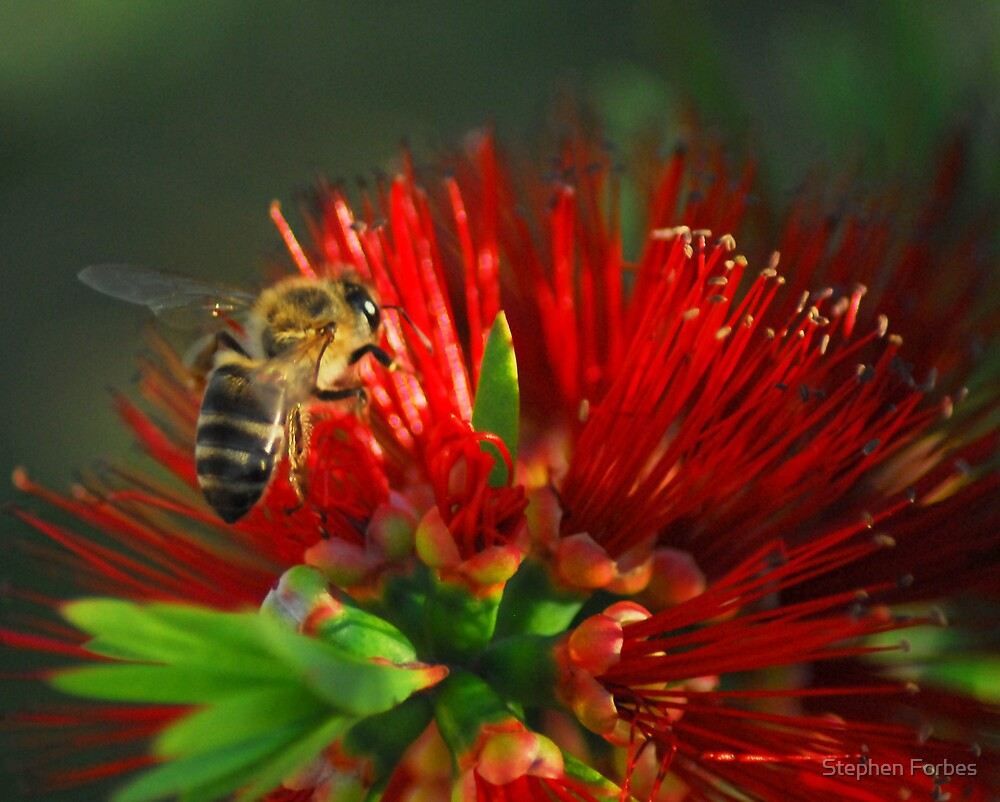 Winter Bee by Stephen Forbes