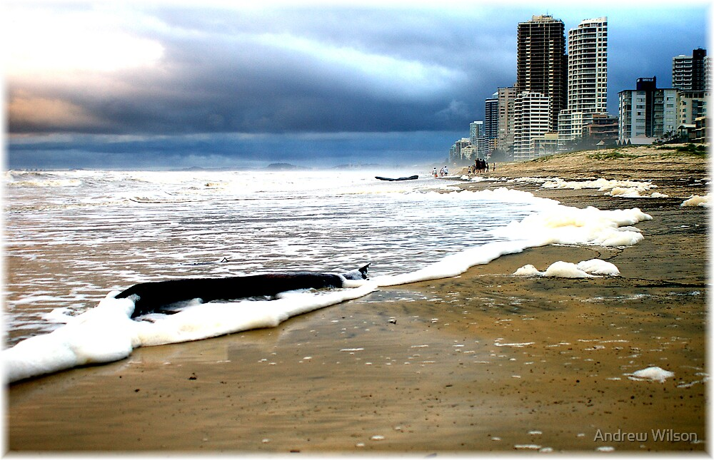 Gold Coast Beach closed by Andrew Wilson