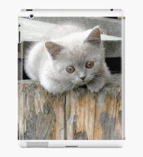British cat iPad Case/Skin
