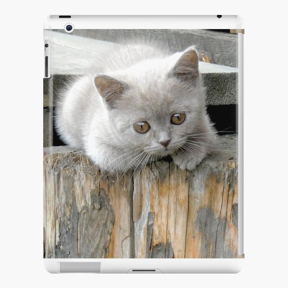 British cat iPad Case & Skin
